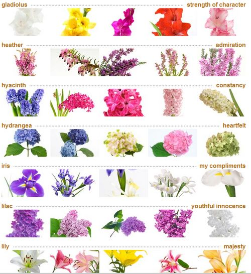 Flower Meanings: Heaven Flowers Meaning In Urdu